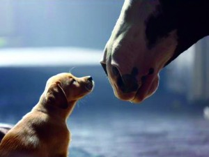 Budweiser commercial featuring some serious puppy love. Courtesy of usatoday.com.